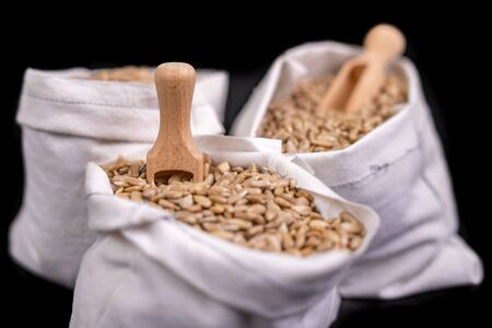 Sunflower seeds in fabric bags. Tasty beans from which oil is made. Dark background. Stock Photo
