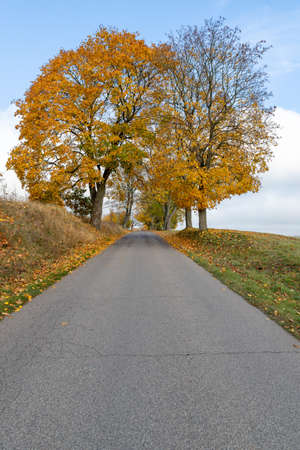 Asphalt road leading between trees. Deciduous trees growing by the road. Autumn season. Archivio Fotografico