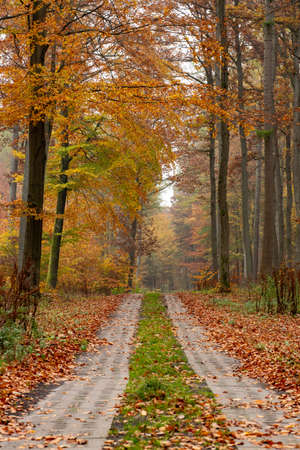 A road leading through a deciduous forest. Leaves fall from tall trees. Autumn season.