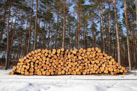 A pile of wood stacked at the edge of the forest. Deforestation in Central Europe. Winter season.