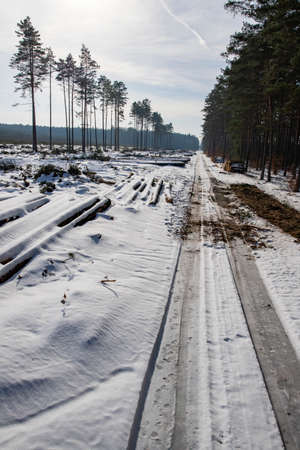 A forest road leading through the forest. Deforestation in Central Europe. Winter season.