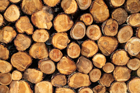 The face of the log was stacked. Deforestation in Central Europe. Winter season.