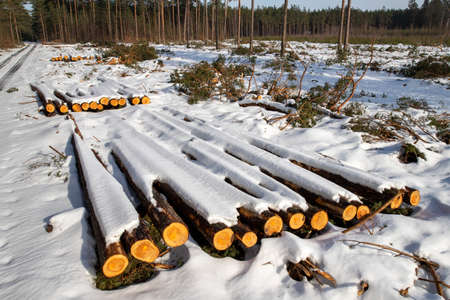 Logs of wood covered with a thick layer of snow. Deforestation in Central Europe. Winter season.