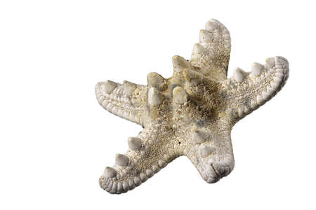 Starfish shell. The shell protects the mollusk against weather conditions. Isolated background. Standard-Bild