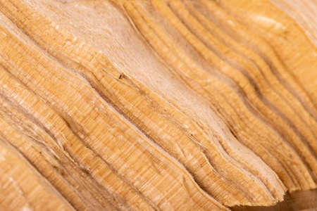 Cross section of a piece of pine wood. Wood grain visible in cross section. Light background.