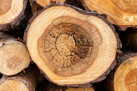 Stacked freshly cut trees. Logs prepared for transport. Spring season.