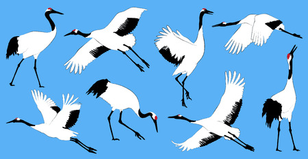 Japanese red crowned cranes