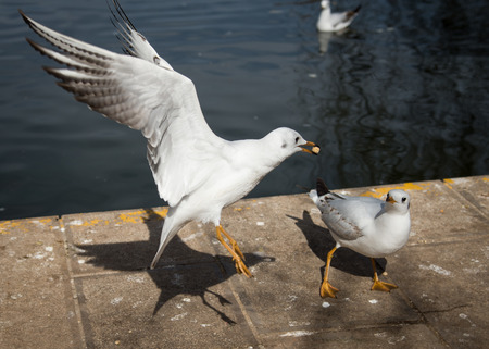 Hurl: Seagull by the lakeside