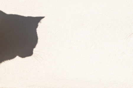 Cat shadow on the white wall