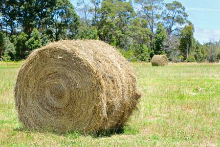 haystacks: Australian rural field landscape with haystacks and blue sky Stock Photo