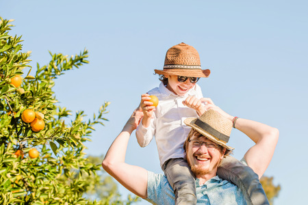 citrus family: Happy father with his young son enjoying family time on citrus farm picking oranges, lemons and mandarins. Relationships, family concept