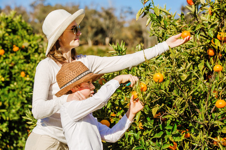 citrus family: Smiling happy mother and son harvesting oranges and mandarins at citrus farm. Family picking oranges, mandarines and lemons on sunny summer day Stock Photo
