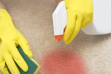 dirty carpet: cleaning red stain on a carpet with a sponge