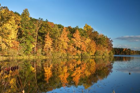 beautiful landscape with trees reflecting from the water Stok Fotoğraf