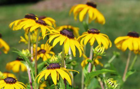 beautiful yellow flower background Stok Fotoğraf