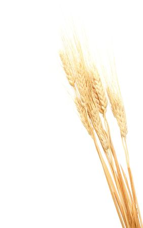 Close up of a wheat ears isolated on white Stock Photo