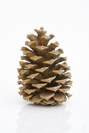 front view of a pine cone isolated against white background Stok Fotoğraf