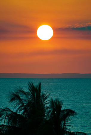 Sunset and sea with palm trees silhouette