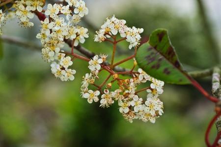 Spring flowers Stock Photo - 13720792