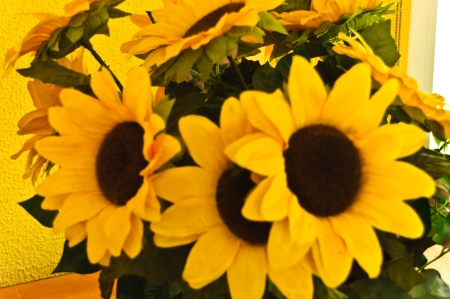 enormous: Several daisies that are enormous and that do a few giant branches