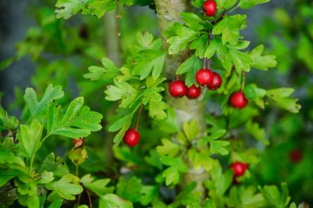 epoch: Fruits of the tree in his seasonal epoch