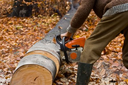 forester: Lumber jack with chainsaw working on beech logs Stock Photo