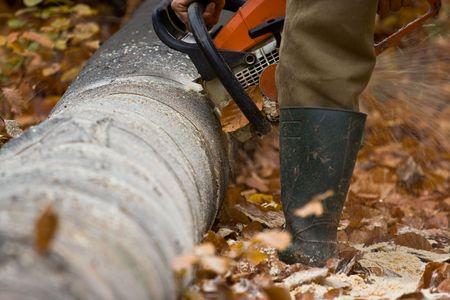 lumberman: Lumber jack with chainsaw working on beech logs Stock Photo