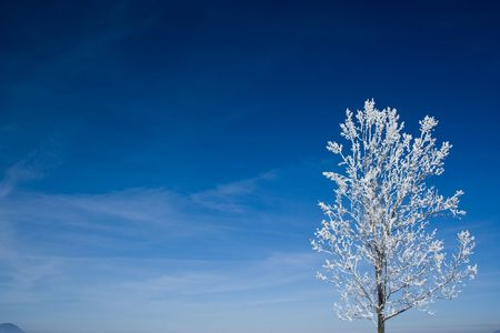 delimit: Tree covered with snow on a blue sky background