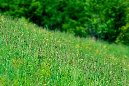 Green meadow with a forest in the background Stock Photo - 3076656
