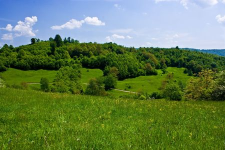 Forest in a sunny day with sky and white clouds Stock Photo - 3076660