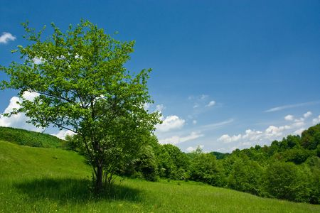 Forest in a sunny day with sky and white clouds Stock Photo - 3076658