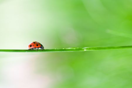 Close-up of a ladybug on a straw over green blurred background Stock Photo