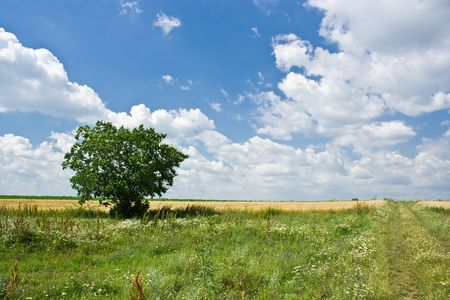 Single tree in a meadow under blue sky with clouds Stock Photo - 3197309