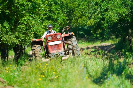 Old farmer plowing between trees in an orchard photo