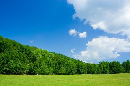 Landscape with forest and grassfield under blue sky Stock Photo - 3225892