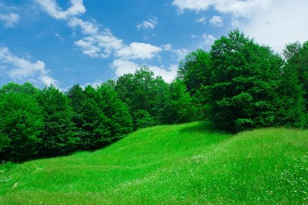 grassfield: Landscape with forest and grassfield under blue sky