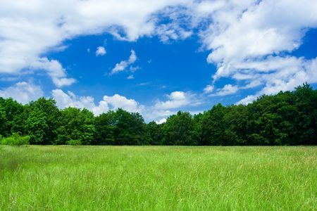 Landscape with forest and meadow under blue sky with clouds Stock Photo - 3253452