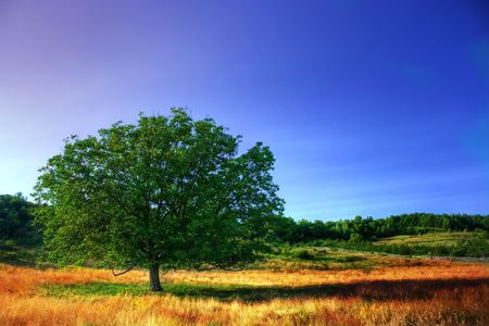 High dynamic range image of a single tree un a meadow under clear blue sky