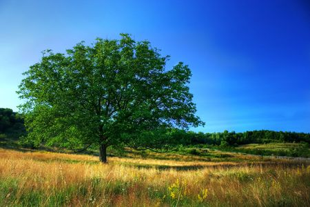 High dynamic range image of a single tree un a meadow under clear blue sky Stock Photo - 3281711