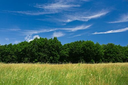 Forest in a sunny day with sky and white clouds Stock Photo - 3358853