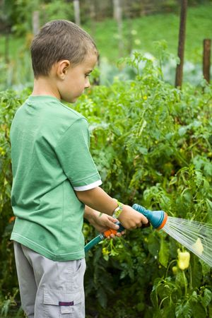 Seven years old boy spraying vegetables with a sprinkle photo