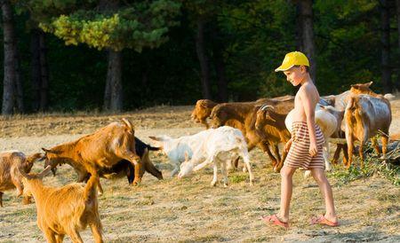 caucasian shepherd: Little shepherd with yellow cap and his herd of goats