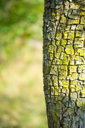 Close up detail of a tree bark Stock Photo - 3708107