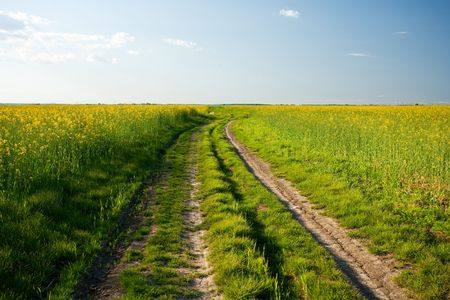 Countryside road in a canola field at sunset photo