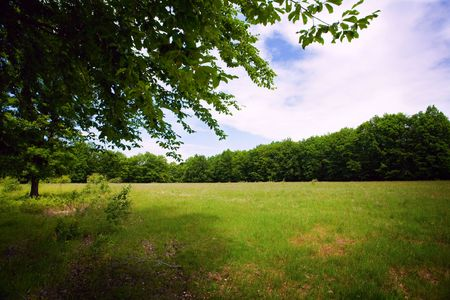 Beautiful landscape with green forest and meadow on a cloudy day Stock Photo - 5058410
