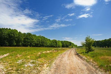 A country road on a hill with forest and meadow photo