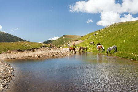 Horses drinking water from a pond in the mountains photo
