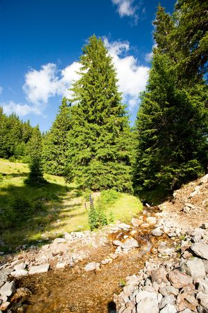 pine creek: Creek flowing through a pine forest in mountains