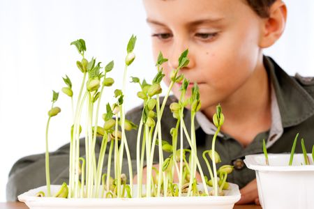 practical: Close-up portrait of a cute kid at a practical biology lesson Stock Photo