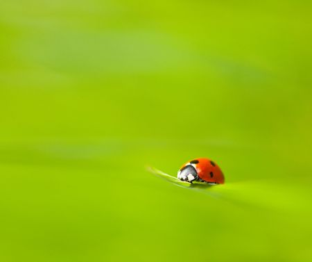 Macro of a ladybug on the top of a grass straw Stock Photo - 6792645